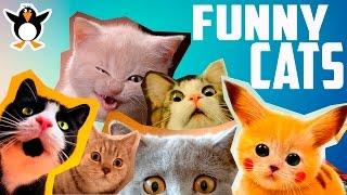 Подборка котов! Funny cats, Смешные коты!!! Прикольные, ржачные, веселые котики, кошки, котята.