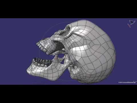 CAD Human Skull Model (Cranium) M3P1D1V1Skull In CATIA