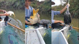 해산물 잡기 2021 ,새와 많은 물고기와 낚시 #  …