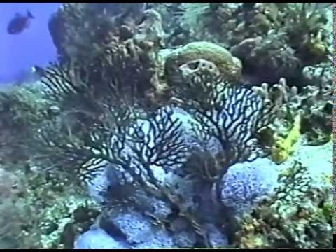 Cozumel Dives 2/3/99 - Columbia, San Francisco Wall, Tormentos (Night Dive)