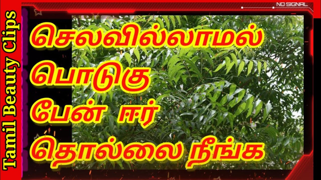 Download How to cure lice in hair in tamil   Tamil   Tamil Beauty Clips