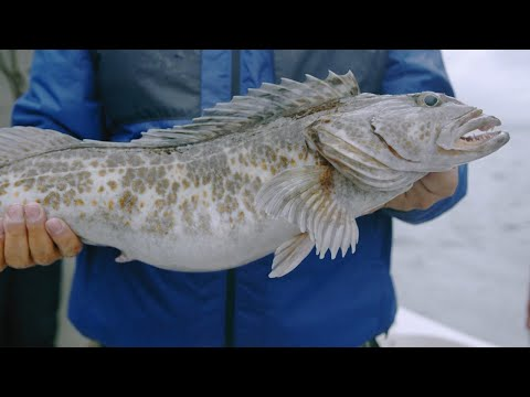 Fishing BC Presents: Year Round In Tofino With Cleanline Sportfishing