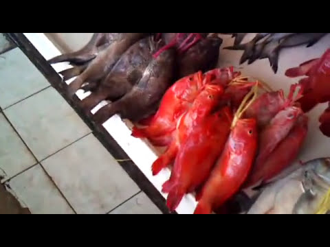 Jeddah fish market 2010- FIRST TIME EVER ON YOUTUBE