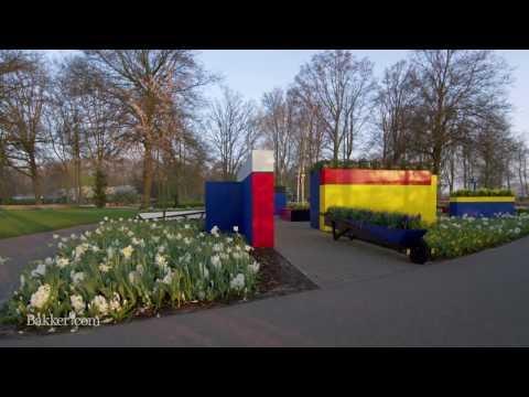 Keukenhof, le plus grand Parc Floral, filmé avec un drône
