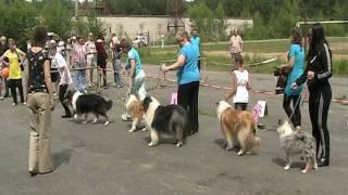 """Моно колли - Конкурс """"Лучшая молодая собака"""" 2011 г."""