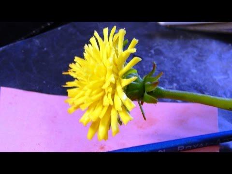 Видео - уроки по лепке цветов из полимерной глины