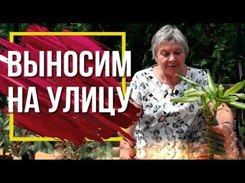 Выносить ли комнатные растения Летом на улицу ��