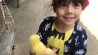 Lulu na Fazenda viu Avestruz Pavão