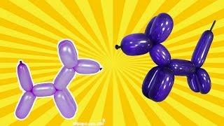 ♡♡♡ Собачка из надувного шарика. Фигуры из надувных шаров.
