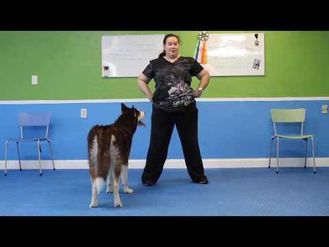 Teach Your Dog the Peek-A-Boo Trick!