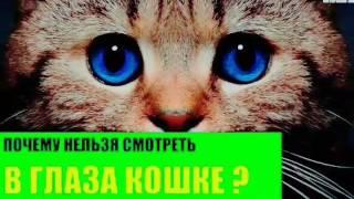 Почему нельзя смотреть в глаза кошке???