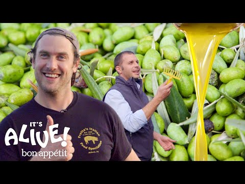 Brad Makes Olive Oil (In Italy!) | Its Alive | Bon Appétit