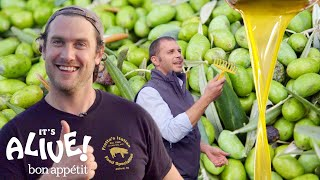 Brad Makes Olive Oil (In Italy!) | It\'s Alive | Bon Appétit