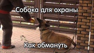Как обмануть собаку для охраны