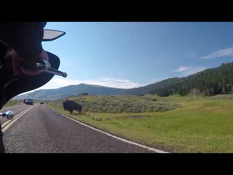 Moment with the bison on my Bike in Yellowstone...