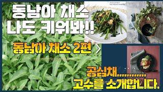 동남아 채소 재배 방법…