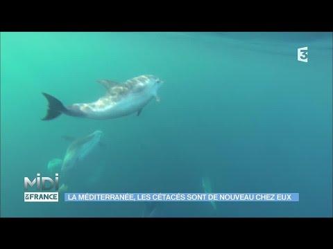 Découvrez la ferme aquacole biologique de Cannes