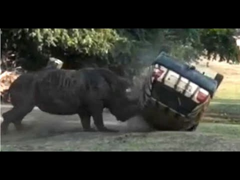 Angry rhino flips car at safari park| CCTV English