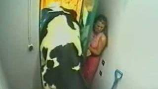 Repeat youtube video Big Brother Crazy Cow very funny no xxx