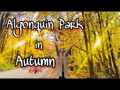 Algonquin Park In Autumn 2019 | Fall Foliage In Canada | Travel Vlog