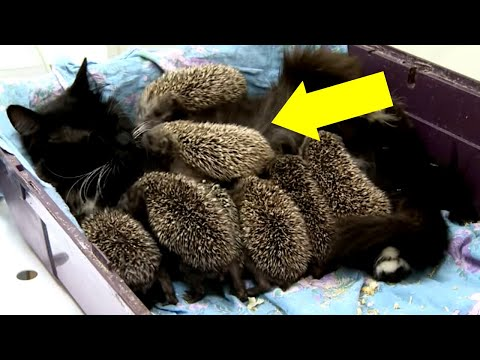 Gatta Partorisce una Cucciolata, ma tra i suoi Piccoli Non ci Sono Solo Gattini