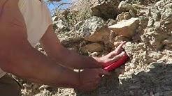 Gold Nugget Hunting in Quartzsite Arizona