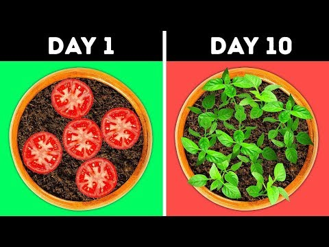 25 Gardening Hacks That Will Blow Your Mind Easy DIYs And Life Hacks by 5 Minute Crafts Zone