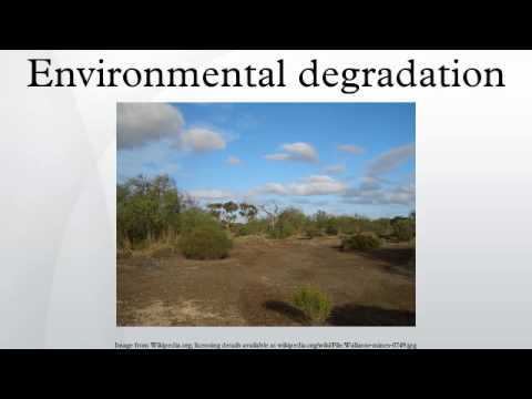 what is environmental degradation and its causes