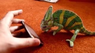 Прикольные ролики Невероятный чудо хамелеон  Funniest Animals  Интересное видео на ютубе!
