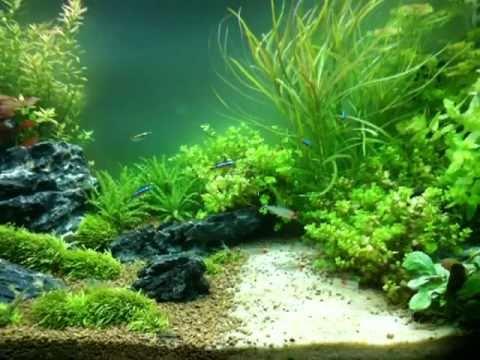 il mio acquario tropicale dolce 125 litri 5 settimana
