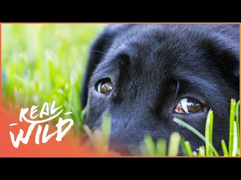 Will Shy Dog Benny Regain His Confidence? | For The Love Of Dogs | Wild Things Documentary