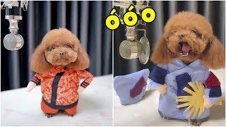 Chú chó biết HÁT hot nhất trên Tik Tok Trung Quốc | Yêu Pets