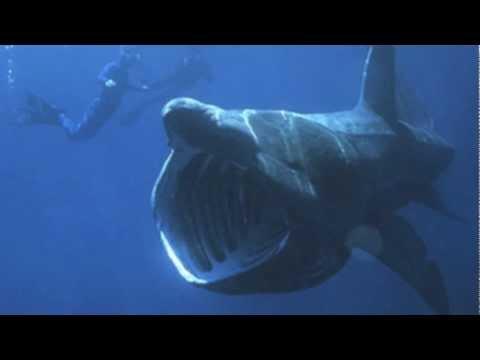 Fancy Sheep Reads: Episode 8- Jeremy Clarkson's Basking-Shark-Jaw-Sized P***y