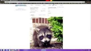Урок 9  Загрузка картинок из сайта для вставки в видео газету!