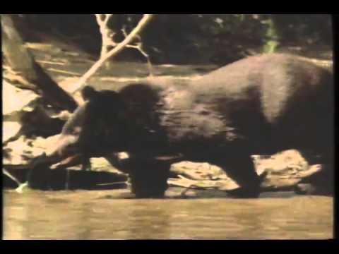 The Adventures Of Milo And Otis Trailer 1989 Youtube