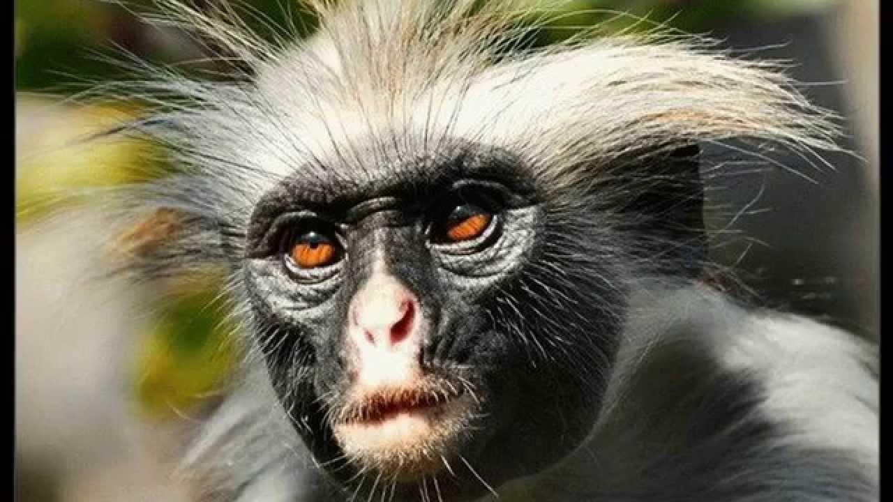 Днем рождения, самые смешные картинки про животных фото
