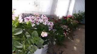 Галерея комнатных растений