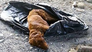 owner-dumped-puppy-near-river-with-legs-tied-up-in-trash-bag-but-these-heroes-saved-its-life