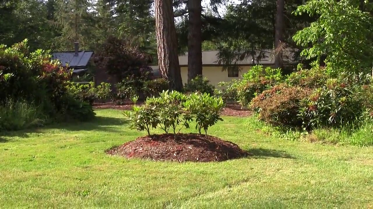 How Much Shade Do My Rhododendrons Get A Quick Look At My