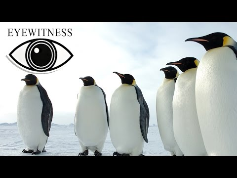 EYEWITNESS | Arctic & Antarctic | S2E2