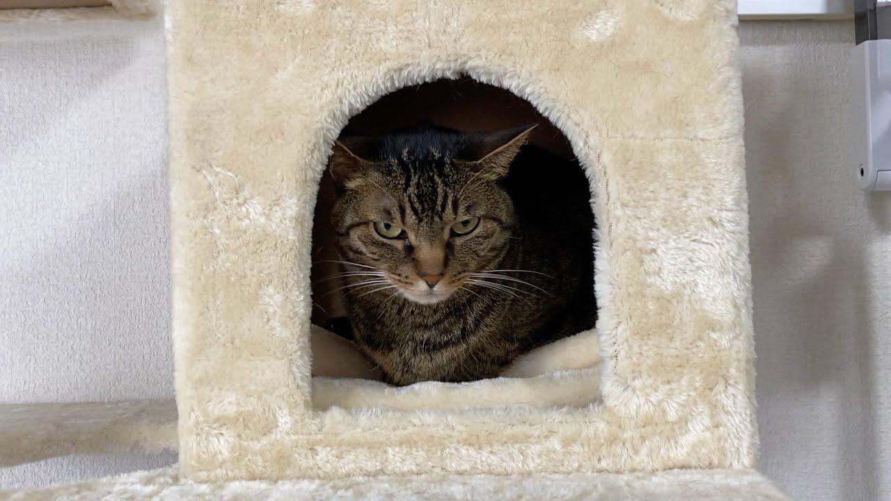 凶暴猫のお部屋に俺が近づいたらまさかの結果に...