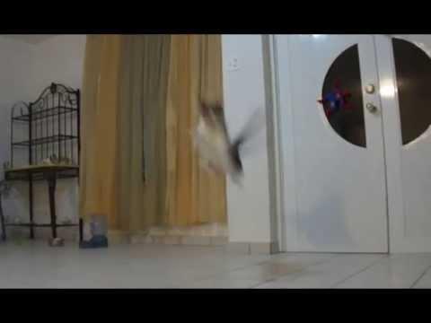 My cat's big jump (slow motion)
