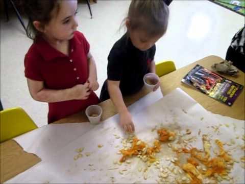 Pre-K and Kindergarten Pumpkin Exploration s