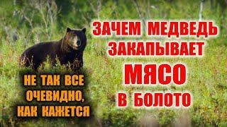 ВЫЖИВАНИЕ, БУШКРАФТ Зачем медведь закапывает мясо в болото. Я знаю ответ! Автономка и законы природы