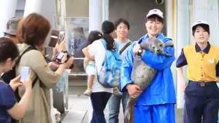ゴマフアザラシの赤ちゃん「きなこ」に命名