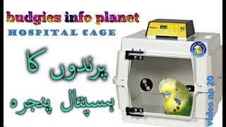 How to set up hospital cage for budgies or other birds video no 20