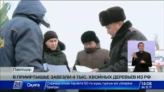 В Павлодаре становится немодным покупать«живые» ели