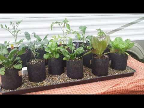 "Incredible Automatic Self Watering Grow Bag Garden System ""Plant it and Forget It"""