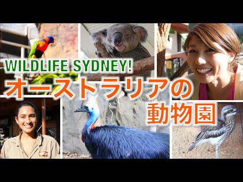 オーストラリアの動物園! // Wildlife Sydney!〔# 282〕