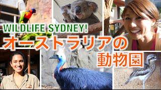 バイリンガール英会話【#245】オーストラリアの動物園!Wildlife Sydney!